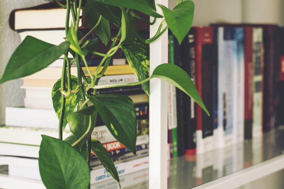 Wystarczy ciekawy pomysł, chęci i określony budżet, aby urządzić w domu efektowną bibliotekę