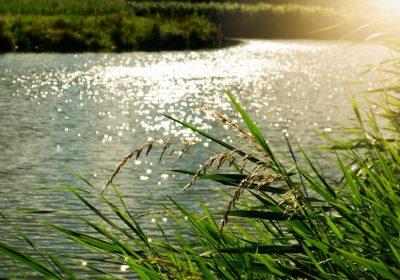 Działka nad rzeką wśród zieleni Sprawdź Gdów