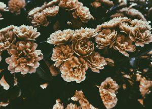 Kwiaty vintage jednym z najmodniejszych trendów 2019 roku